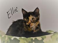 Ellie's story Ellie is both loving and affectionate she