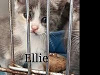 Ellie's story White stripe on noseSullivan County