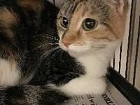 Ellie's story litter trained, meows when left alone,