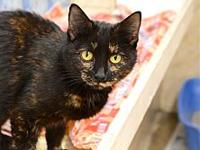 Ellie's story Ellie is a retired mama cat; she came in