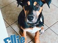 Ellie's story Ellie! Ellie is a beautiful, 6 month old,