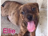 Ellie's story You can fill out an adoption application