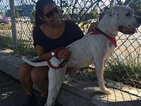 Elliot's story Elliot is a 2 y/o American Bulldog. We