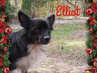 Elliot's story *Please enjoy the video of this dog.