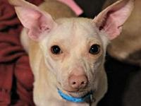 Elliott's story **Elliott is currently being fostered
