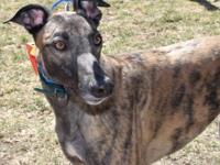 Elliott is a 2 year old red brindle male that arrived