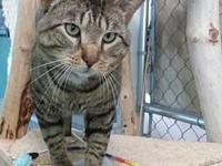 My story My name is Elliott.  I�m a big handsome cat
