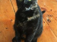 Eloise is a beautiful 2 year old young tortie kitty