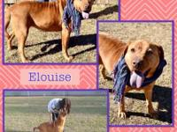 Hey yall!  Im Elouise,  a 2-3 year old, 56 lbs,