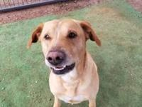 My story Hi...I am Elroy a 3 year old Retriever/mix