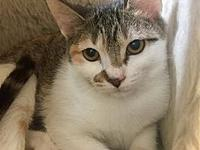 Elsa's story Primary Color: Tabby Secondary Color: