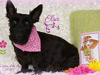 Elsa *PENDING ADOPTION's story Elsa is a beautiful 5