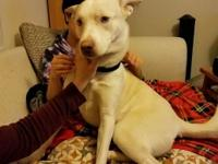 Elsie is a Siberian Husky/ Staffie mix who is 1 year 3
