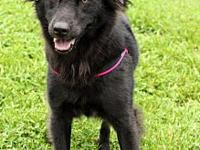 Elsa's story Elsa # 0947 is a 4-year-old female,