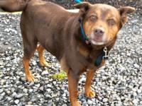 Elsie- 18154  8-9 year old Female  HW- ***Has a large