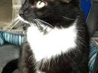 Elsie's story Young Adult Female B & W tuxedo Elsie the