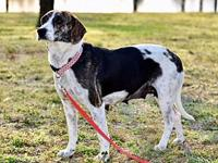 ELSIE's story Elegant Elsie is a 1 1/2 year old female