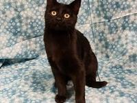 Elvira's story ELVIRA FEMALE 5MONTHS OLD Can be shy at