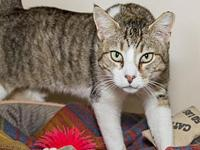 Elvis Purrsley's story Hi there, I'm Elvis! I love to