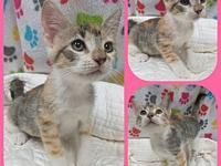 Ember's story Our adoption fee is 80.00 which covers