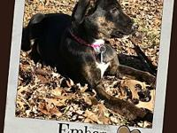 EMBER's story Ember is our independent puppy. She's