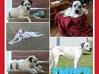 Ember's story Meet Ember, a sweet 2 y.o. Dalmatian mix
