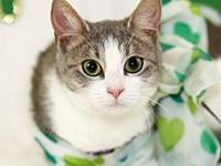 My story I am Emerald  the stunning approx 9-month to
