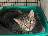 Emery's story PAW Animal Shelter is a high intake No