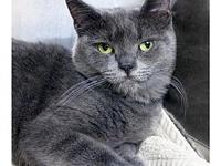 Emilia's story Emilia is a very sweet and loving gal