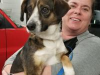Emily is a 2yr. Beagle mix girl. She is Hw Negative and