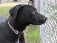 Update: Emily is now in a foster home.  She's a lab mix