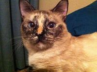 Emily's story Gentle, Purr Machine, Expert Lounger Need