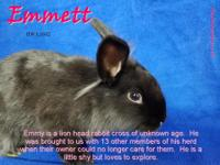 Emmett is a friendly boy who, while can be a bit shy,