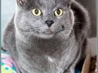 EMMIE's story $97.50 FEE INCLUDES: neutering/spaying,