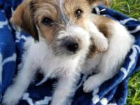 Hi! I'm Emmie. I'm a 10 week old terrier/shih tzu mix
