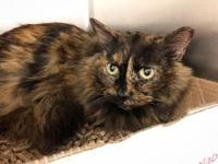 EMMY's story $97.50 FEE INCLUDES: neutering/spaying,