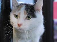 Emmy's story Emmy is a beautiful dilute calico senior