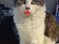 Hi, My name is Kitty! Tabby Cat With White Kitten For