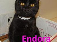 Endora's story Endora is a sweet cat with the most