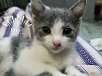 Engie's story Meet Engie! Engie is the little runt of