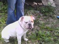 I have an English Bulldog that I'm looking to give a