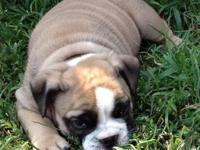 Dozer was born 6/26/12 and is now ready to find a
