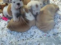 Hello guys, we have available NOW, 2 adorable male and