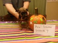 Ready nov 9  Gizmo is a great little guy full of