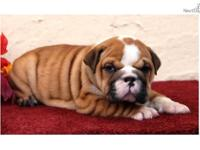 Animal Type: Dogs This puppy has its vaccinations and