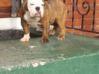 CHICA IS FOR SALE ....SHE IS 4 MONTHS OLD BEAUTIFUL