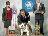 Championed Sired,,GCH Wellington H.B. is sire he is