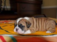 Champion blood line.. lots of wrinkles update shots