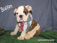 Beautiful AKC puppies Males and Females available. All