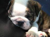 We have beautiful bulldog puppies that are ready to go